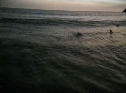 Surfers in Soarin'