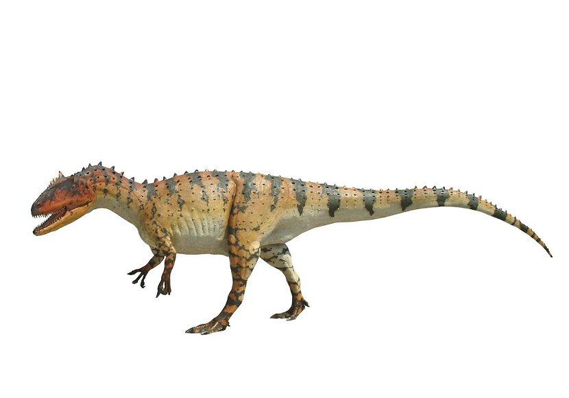 Allosaurus0002-1-