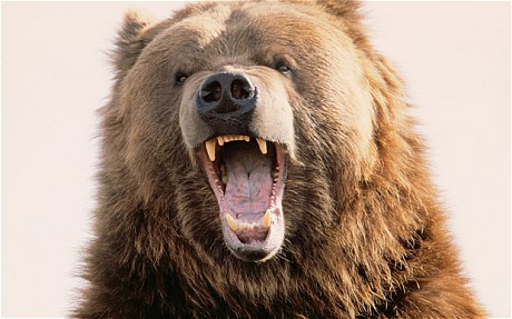 grizzly_1955242c