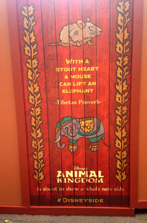 Inspirational proverbs on Animal Kingdom Refurbishment walls -- also the plot of Dumbo.
