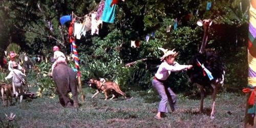 The animal race in Swiss Family Robinson